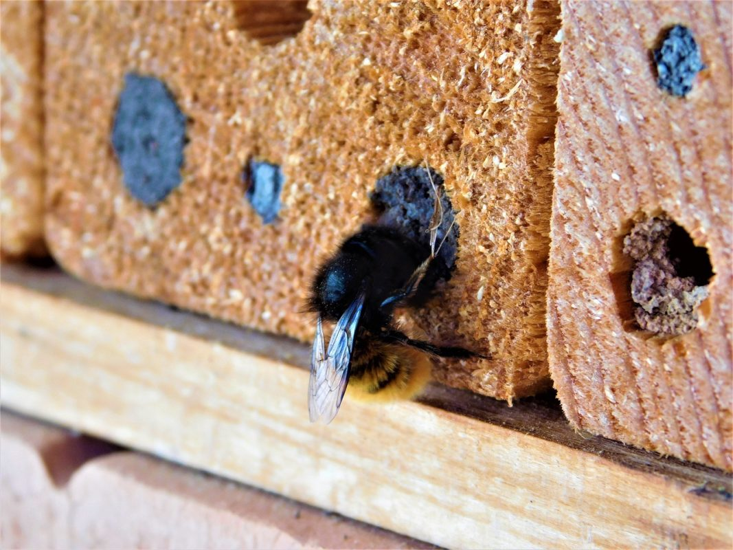 Biene an Insektenhotel
