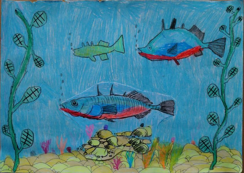 Sebastian L. zeichnung Fische