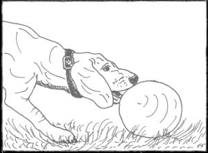Hund beißt Ballon