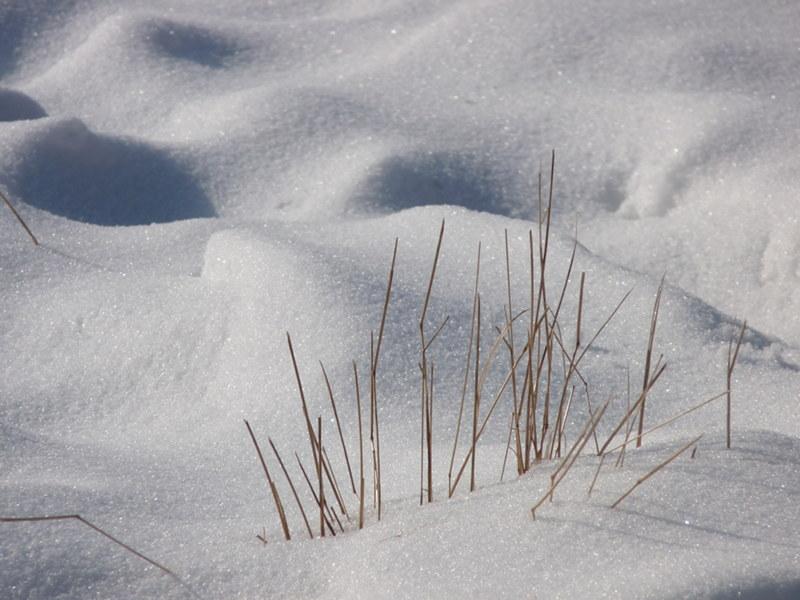Schneebedeckte_Wiesen