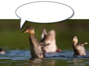 Ente mit Sprechblase