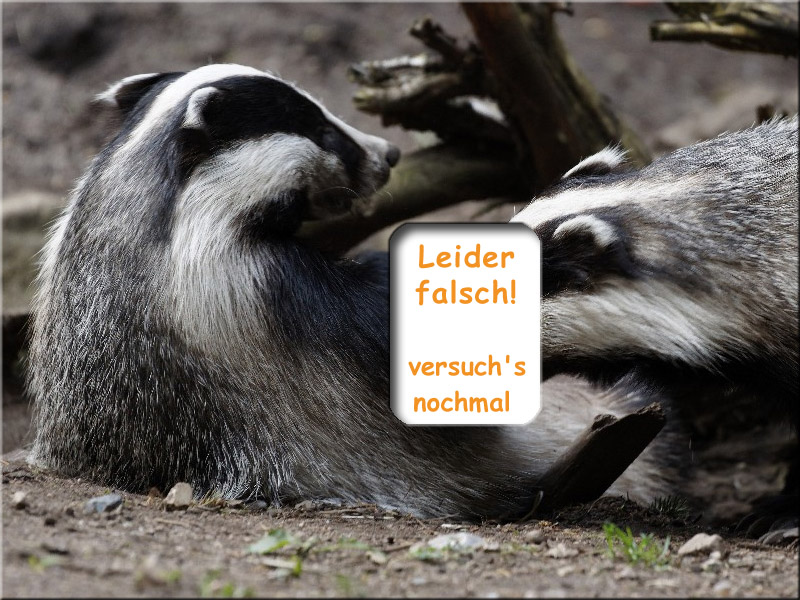 dachs-raetsel_01