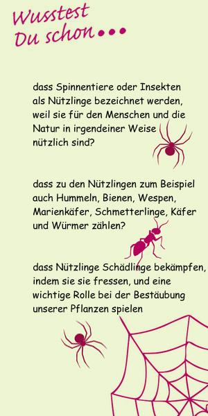 wusstest-du-insekten