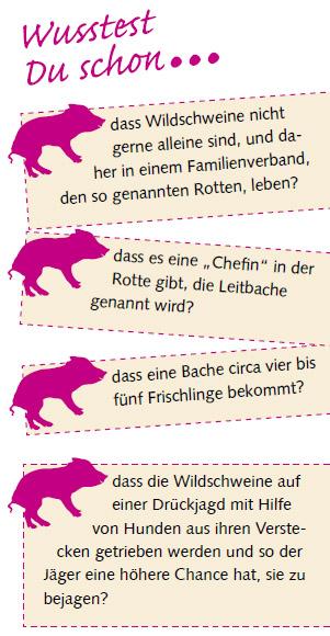 wusstest-du-wildschweine
