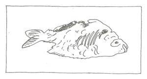 toter-fisch