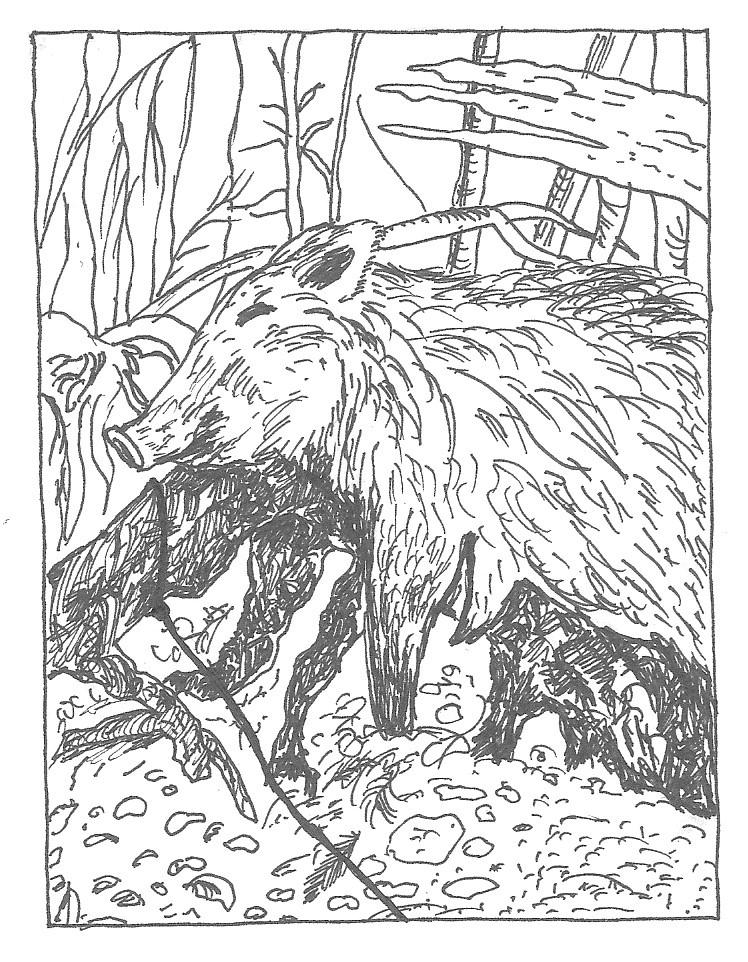 Muck Zeichnung Wildschwein
